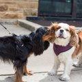 犬同士がお散歩で交…