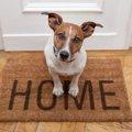 犬用ゲートの必要性…