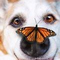愛犬が虫を食べた!…
