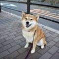 犬が散歩に出ても歩…