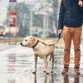 犬のために梅雨対策…