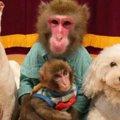 犬と猿は仲良くなれ…