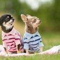 愛犬の新型コロナ対…