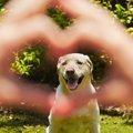 犬が『愛情不足』な…
