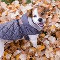 冬は犬に洋服を着せ…