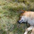 犬が急に倒れる原因…