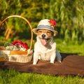 犬に帽子は被せるべ…
