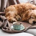 犬にコーヒーは絶対…