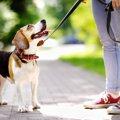 犬が人間の感情を読…