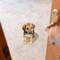 愛犬がトイレやお風…