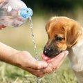 犬に炭酸水を与えて…