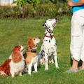 犬のトレーニングの…