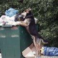 なぜ犬はゴミ漁りが…
