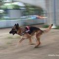 犬の散歩の時間はどのぐらい?運動量の調べ方や注意点について