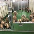 長崎の一般家庭で起きたマルチーズ50頭の多頭飼育崩壊