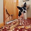 犬が家の中で壊しが…