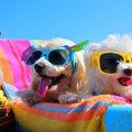 愛犬の夏バテを予防…