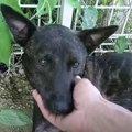 トラバサミに前足を奪われた犬を救ったのは…犬達の友情に感涙(2)
