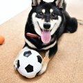 愛犬のための床材選び!メリットやおすすめ商品まで