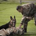 警察犬訓練士