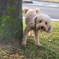 意外とある!犬の野…