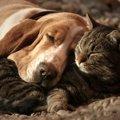 犬と他の動物との共…