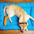 犬が足を怪我してい…