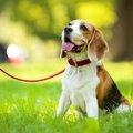 犬を散歩中に喜ばせ…
