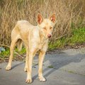 犬が野生動物や環境…