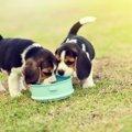 愛犬に合わないドッグフードを与えるとどうなる?どうやって選ぶのがベスト?
