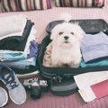 犬との旅行に持って…