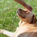 教えて!犬の免疫力…