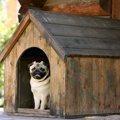 犬を外で飼うと寿命…