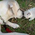【実話】愛犬に届い…
