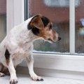 超危険な『犬の病気…