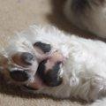 犬の肉球には隠された秘密がある!