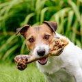 実は犬に『骨』を与…