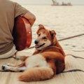 犬と一緒に音楽を楽…