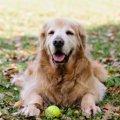 犬の『老化サイン』5つ!こんな仕草をしていたら、お年寄りかも?