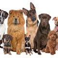 犬の遊び行動が犬種…