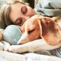 犬が『寝心地がいい…