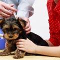 子犬のワクチン接種…