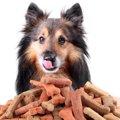 犬のご飯における『…