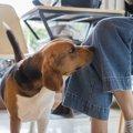 愛犬が飼い主の股を…