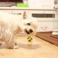 犬の便秘解消法!~症状や原因・治療から予防法まで~