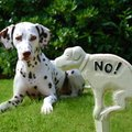 犬のウンチを放置す…
