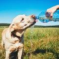 犬の自動給水器!種…