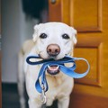 犬が満足できていな…