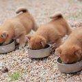 犬の『ごはん食べさ…