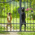 犬が『来客の時に吠…